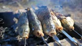 chargrilled : process of fish preparation. Fish grilling on a barbecue in outdoor Stock Footage