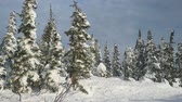 inclinado : Amazing winter mountains panorama with ski slopes and ski lifts in Sheregesh in slow motion. 1920x1080