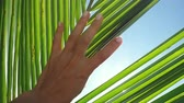 brilho : Female hand touching palm leaf and the sun. Woman enjoying bright tropical sun with lens flare effects in slow motion on clear blue sky background. 1920x1080 Vídeos
