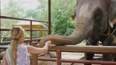 católico : Thailand, Koh Samui, 2 february 2016. Cute girl feeding the elephant by bananas in zoo. slow motion. 1920x1080
