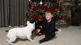 família : Boy and French Bulldog puppy at Christmas Stock Footage