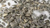 girassol : Sunflower seeds pouring into a mound Stock Footage