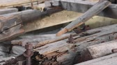 madeira de lei : Old wood Stock Footage