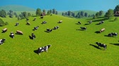 springtime : Herd of cows on a pasture aerial view
