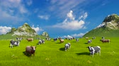 verdejante : Farm landscape with a herd of mottled dairy cows grazing on a verdant alpine pasture