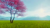 blooming : Spring scenery with single blossoming sakura cherry tree and pink petals falling on fresh grass in slow motion against hazy mountains background Stock Footage