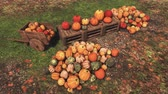 Autumn harvest of pumpkins on rural farmers market High angle view Stock Footage