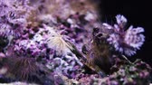 Colourful Coral reef with violet hood.