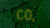 clorofila : Carbon dioxide. Absorb CO2. Dark green leaves background. Close up 4K