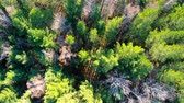 rezervace : Aerial view of treetops. Camera moves forward over the forest. Siberia