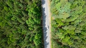 Aerial view of white car driving on road in forest Стоковые видеозаписи