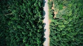 Aerial view of road through the forest. Vertical shot