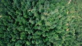 Drone flying forward above beautiful green forest. Aerial vertical shot