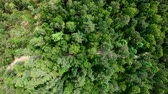 quadcopter : Drone flying forward above beautiful green forest. Aerial vertical shot