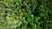 Drone rising up above green forest. Aerial vertical shot. Birds eye view Stock mozgókép