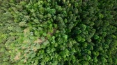 Drone rising up above green forest. Aerial vertical shot. Birds eye view 動画素材