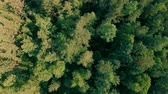 tipy : Drone flying forward above beautiful green forest. Aerial vertical shot