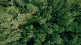 Aerial drone shot over the forest. Drone flies forward above the trees 動画素材