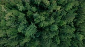 konzervace : Aerial drone shot over the forest. Drone hovering above the trees