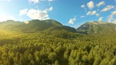Aerial shot in mountains over green trees. Drone rise up above the forest at sunset. Beautiful landscape: mountains, woodland, sun rays and blue sky with white clouds. Yellow sun flare Стоковые видеозаписи