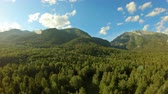 Aerial shot in mountains over green trees. Drone rise up above the forest. Beautiful landscape: mountains, woodland, sunlight and blue sky with white clouds
