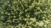 rotasyon : Aerial vertical shot above treetops. Drone rise up and rotates over forest