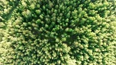 лесной : Aerial vertical shot above treetops. Drone hovering over forest