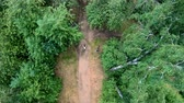 Aerial view of cycling in the park. Girl riding a bike on a forest trail. Vertical, top-down, slow motion