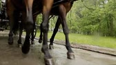 галоп : Close-up of legs of horses running on the road