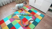akik : A little boy plays in the train, running after him to overtake Stock mozgókép