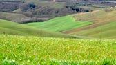 farmhouse : Typical Tuscany landscape in Crete Senesi. Windy day with light moving effects on the field. Italy.