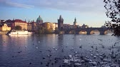 gotic : Swans playing on the Vltava river, background with Prague and Charles Bridge, Czech Republic.