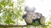 windy : Toy bear on branches Stock Footage