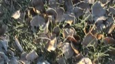 orvalho : Walking through frosty leaves in slow motion. Vídeos
