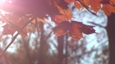 осень : Reddish leaves against bright sun