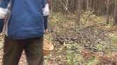 buscar : Man with basket walks through forest looking for wild mushrooms 4.