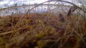 raised bog : lake window on high moor Stock Footage