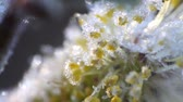 zararlı : return spring cold weather: frost on  flowers Stok Video