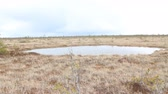 raised bog : High bog with round lake Stock Footage