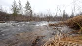 hydrology : Fast stream in the taiga