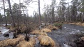 hydrology : Typical taiga river Stock Footage