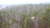 boreal : Its snowing over spring taiga