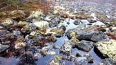 водянистый : beautiful landscape design. Flooded spring woods and stones