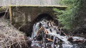 bóbr : Beavers damage hydraulic engineering and road construction 2. Animals gnawed twigs and scored drainage pipe under roa