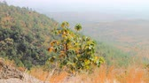 subtropics : Dry, hilly Deccan plateau (India). Bush on slopes late winter