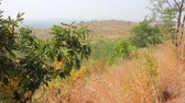 subtropics : Dry, hilly Prairie of the Deccan plateau (India). Bush on slopes late winter