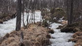 hydrology : Spring is coming! Wild spring flood in forest after snow melts, but trees are bare