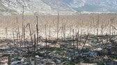 угрюмый : Field occupied by industrial crops in Turkey. Poor stony soil, plant stems overwinter