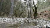 boğa : Subtropical forest with stream in mountains of Western Taurus, spring, Turkey