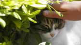 pat : happy cat is fondled among greenery under warm sun